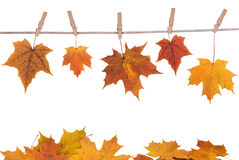 Fall leaves hanging on a cloth Royalty Free Stock Photography