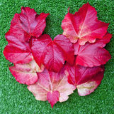 Fall leaves in heart shape over green background Stock Photography
