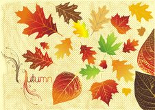 Fall leaves illustration Royalty Free Stock Photos