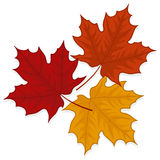 Fall leaves illustration. Autumn leaves illustration on white background Royalty Free Stock Photos