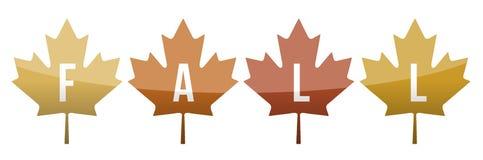 Fall leaves illustration design Royalty Free Stock Image