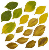 Fall leaves isolated on white stock photography