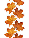Fall leaves line. On white Stock Images