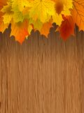 Fall leaves making border on wooden. EPS 8. Fall coloured leaves making a border on a wooden background, Fall Leaves. EPS 8  file included Stock Photography