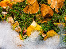 Fall leaves meet winter snow Stock Photography