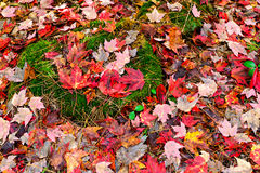 Fall Leaves and Moss on the Ground Stock Images