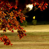 Fall Leaves near Gold green Stock Photo