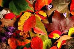 Fall leaves no.2 royalty free stock images
