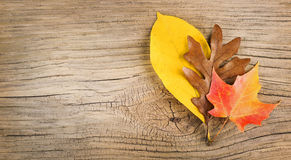 Fall Leaves on Old Wooden Background Royalty Free Stock Photography