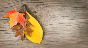 Fall Leaves on Old Wooden Background stock photography