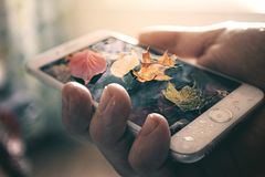 Free Fall Leaves On Smart Phone Royalty Free Stock Photo - 130423365