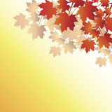 Fall leaves on orange background