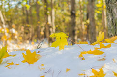 Fall leaves over the snow Royalty Free Stock Images