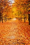 Fall leaves in park Stock Photo