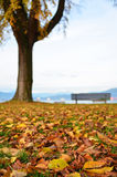 Fall leaves in the park. With park bench in background stock photos