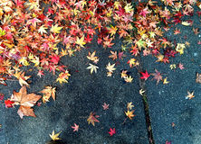 Fall leaves on pavement Royalty Free Stock Image