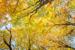 Fall Leaves at Pewits Nest, Baraboo, Wisconsin, USA Stock Photo