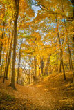 Fall Leaves at Pewits Nest, Baraboo, Wisconsin, USA Stock Images