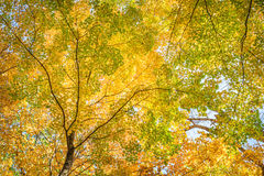 Fall Leaves at Pewits Nest, Baraboo, Wisconsin, USA Royalty Free Stock Images