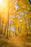 Fall Leaves at Pewits Nest, Baraboo, Wisconsin, USA Stock Image