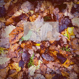 Fall Leaves Poster Royalty Free Stock Photography