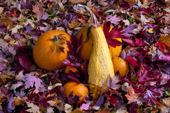 Fall leaves with a pumpkin and squash Stock Photo