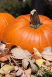 Fall Leaves with Pumpkins Royalty Free Stock Photography