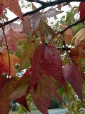Fall leaves in the rain Royalty Free Stock Photos