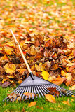 Fall leaves with rake. Pile of fall leaves with fan rake on lawn Royalty Free Stock Photography