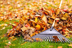 Fall leaves with rake. Pile of fall leaves with fan rake on lawn