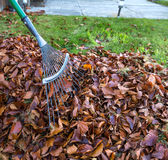 Fall Leaves with Rake Stock Photo