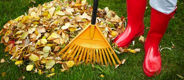 Fall leaves with rake Royalty Free Stock Images