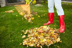 Fall leaves with rake Stock Images