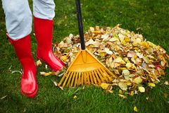 Fall leaves with rake Stock Photos