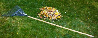 Fall leaves with rake Royalty Free Stock Photo