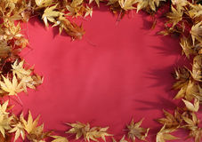 Fall leaves on red background Stock Photo