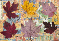 Fall leaves. Fall red maple leaves on a colorful background Royalty Free Stock Photo