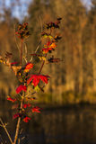 Fall leaves on the river Royalty Free Stock Photos