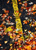 Fall Leaves on Road Royalty Free Stock Image