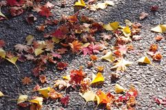 Fall leaves on the road royalty free stock image