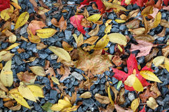 Fall leaves on a rock bed. Stock Photo