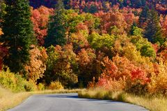 Fall Leaves in the Rocky Mountains above Provo, Utah. Beautiful fall colors in the Wasatch Mountains near Provo, Utah.  Near Squaw Peak above the city, this Stock Photo