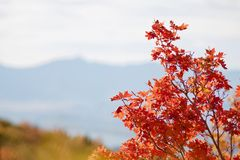 Fall Leaves in the Rocky Mountains above Provo, Utah. Beautiful fall colors in the Wasatch Mountains near Provo, Utah.  Near Squaw Peak above the city, this Stock Images