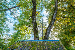 Fall leaves on a roof Royalty Free Stock Photo