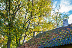 Fall leaves on a roof Stock Photo