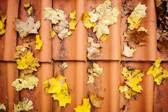 Fall leaves on roof tiles stock photography