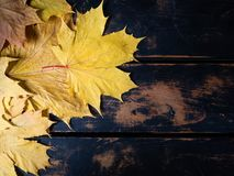 Fall leaves and rustic wood background royalty free stock photo