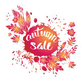 Fall leaves sale Royalty Free Stock Images
