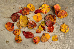 Fall leaves scattered on concrete Royalty Free Stock Photo
