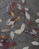 Fall leaves on the Sidewalk Stock Images